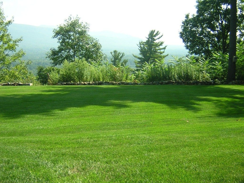 Choosing the right turf grass for your lawn homeowner offers for Yard and garden