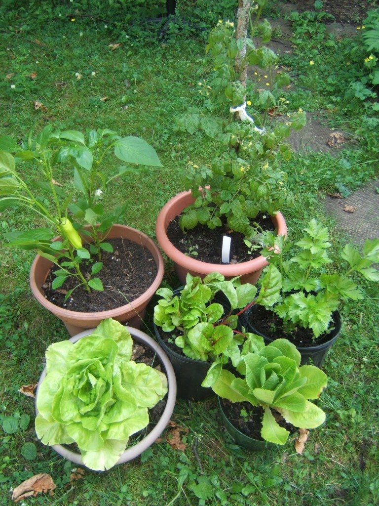 Easy home vegetable crops for container gardening for Simple vegetable garden