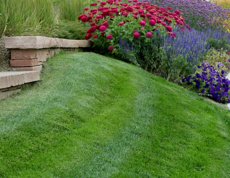 Ordinary Healthy Lawn Part - 5: Ordinary Healthy Lawn Design Inspirations