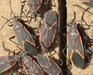 Fall Pest Control Tips